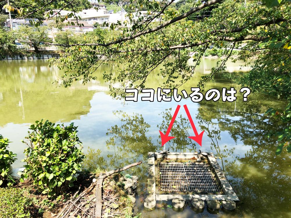 台風の過ぎ去ったあとの池(谷戸池)