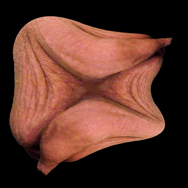 fractalforeskin1