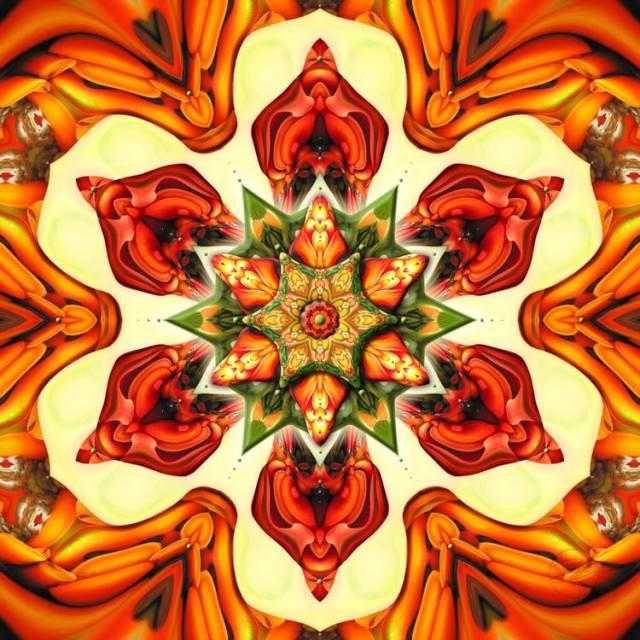 Erythrina on Fire by Karen Hochman Brown