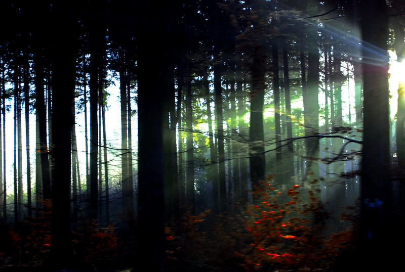 Lost Woods by RicardoEstrada. licensed through DeviantArt under Creative Commons Attribution-Share Alike 3.0 License
