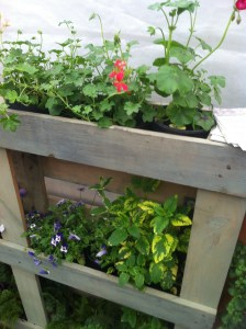 Cheap plant display using an old pallet