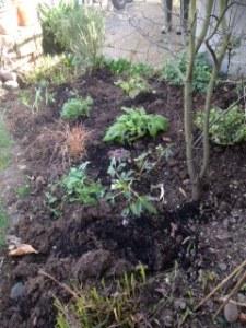 garden weeded 2