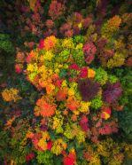 new-york-fall-colors-by-drone-by-michael-matti-581b63437cc90__880