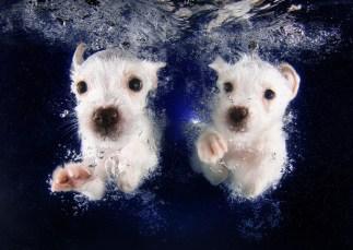 PuppiesSwimming