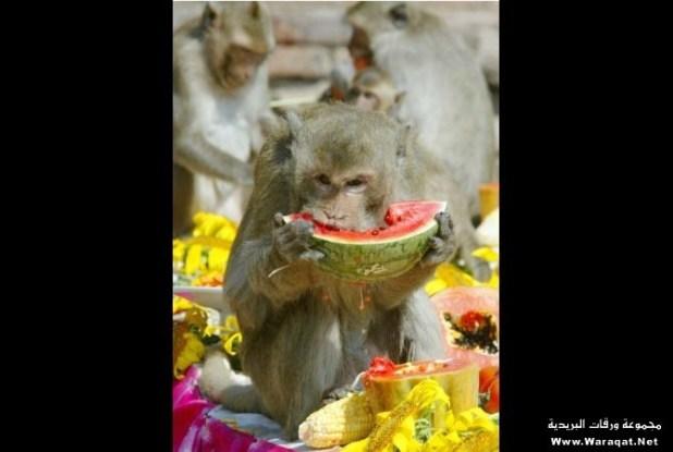 monkey (25)
