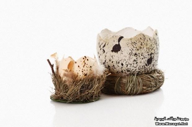Broken easter egg in grass against white background