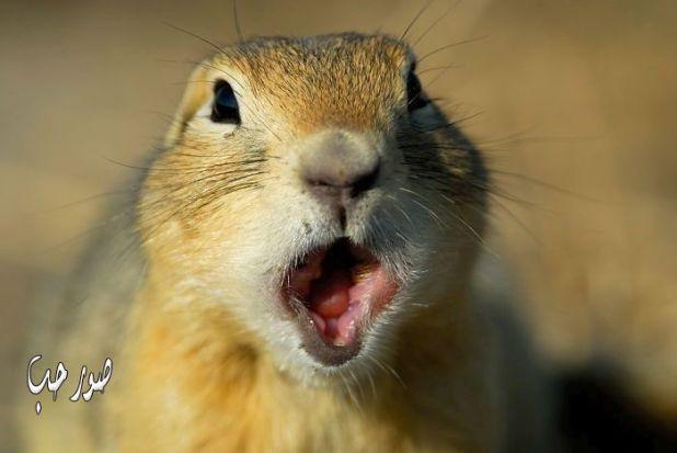 حيوانات مندهشة جدا صور حيوانات تبدو عليها الدهشة مضحكة جدا