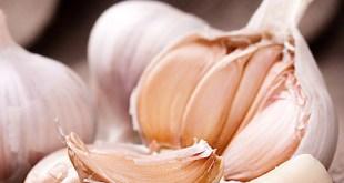 استخدام الثوم لعلاج تساقط الشعر