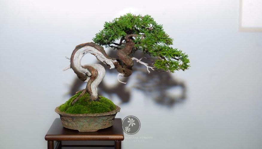 Juniperus - Ronan Le Bras