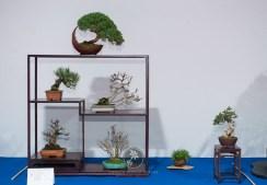 Juniperus chinensis, Pinus thunbergii, Syringa vulgaris, Acer palmatum, Acer palmatum, Pinus thunbergii - Jiri Prochakga