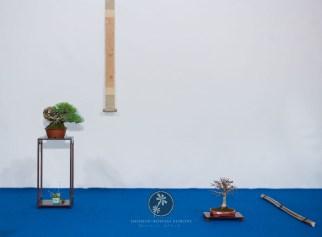 Pinus parvifolia, Zelkova serrata - Bruno Wijman