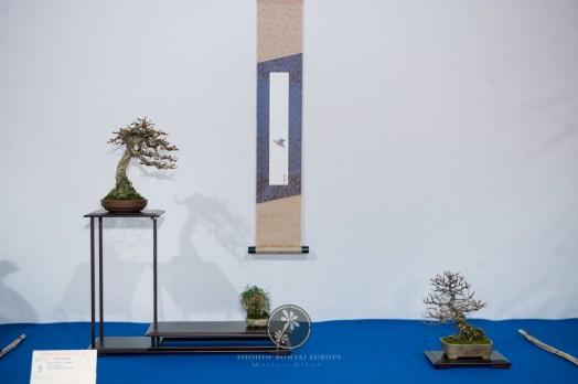 Larix decidua, Cotoneaster horisontalis - Bruno Wijman