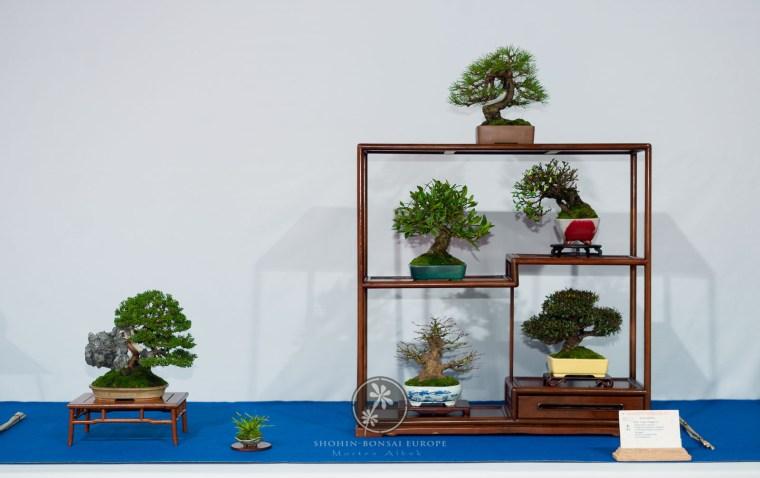Pinus linigra `Laricia´, Juniperus chinensis `Itoigawa`, Trachelospermum asiaticum, Karagan, Gardenia jasminoides, Acer palmatum - Luigi Maggioni.
