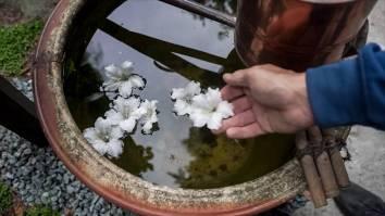 EMPIRE-bonsai-pots-basics.00_00_14_18.Still006