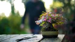 EMPIRE-bonsai-pots-basics.00_01_23_21.Still012