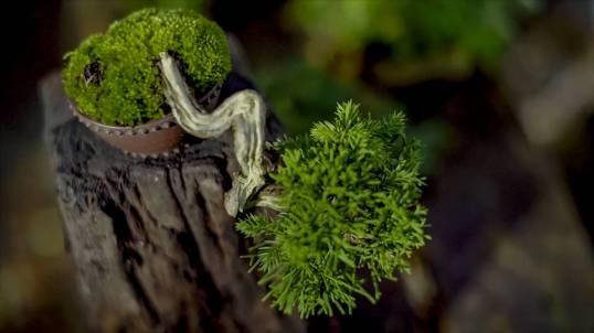 EMPIRE-bonsai-pots-basics.00_01_34_06.Still015