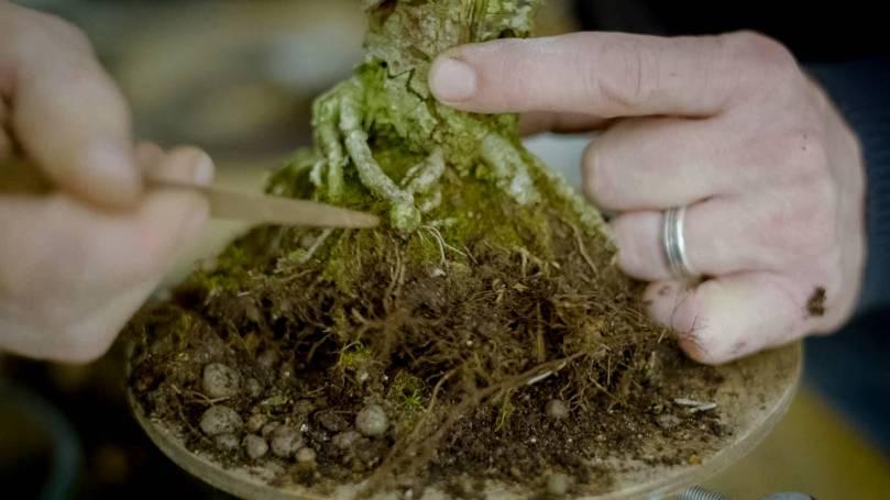 EMPIRE-bonsai-pots-basics.00_04_39_15.Still019