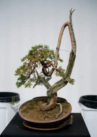 Morten Albek demo tree.