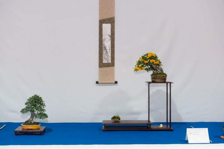 Cotoneaster dammerii, Pyracantha - Bruno Wijman.