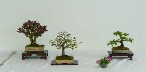 Lene Scheid. Berberis thunbergii, Ulmus minor, Carpinus betulus.