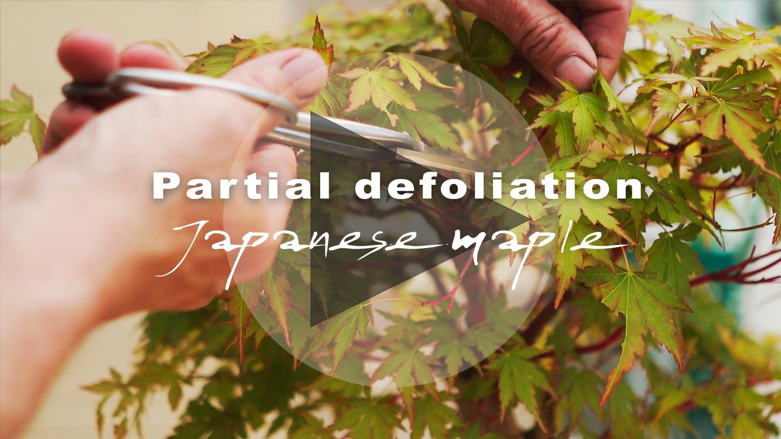 PLAY-maple-defol