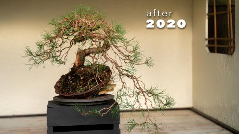 2020-after