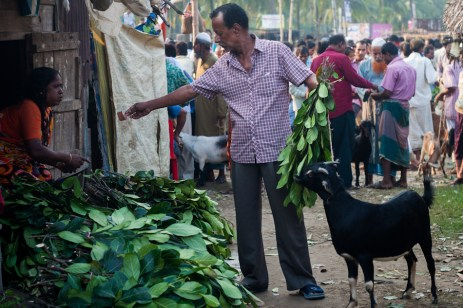 A buyer buying some Jackfruit leaves(a favorite of goats) for his sacrificial animal.