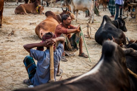Sellers and their cattles resting.