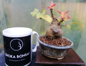 Mini Crab Apple Bonsai