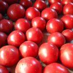 実践、超簡単 シンプルなトマトソース作り