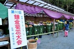 鎌倉菊花大会2013@鶴岡八幡宮:菊で彩る鎌倉の風景が見事