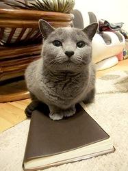 手帳を手放せず忙しそうなニャンコ