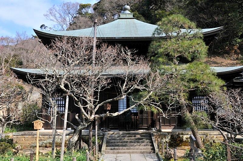 鎌倉瑞泉寺の黄梅