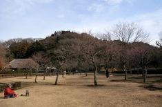 藤沢の梅花チェック新林公園の梅林