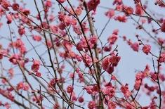 藤沢の梅花チェック新林公園