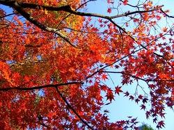 鎌倉の紅葉スポットの紅葉