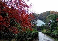 鎌倉の紅葉スポット浄妙寺