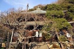 鎌倉瑞泉寺の本殿と黄梅