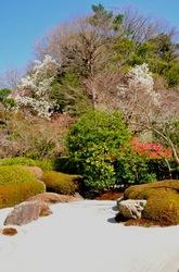 北鎌倉明月院の石庭のモクレンなど