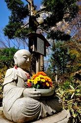 北鎌倉明月院の桜と花想い地蔵