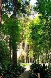 北鎌倉浄智寺の竹