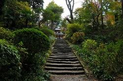 北鎌倉浄智寺の参道の紅葉