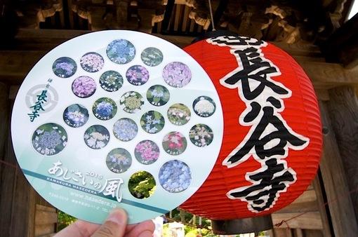 鎌倉の紫陽花(アジサイ)チェック2015:見頃の長谷寺とお休みの成就院・極楽寺・御霊神社