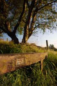 Donald Grundy's Bench