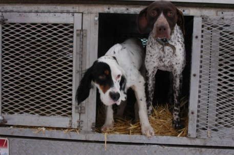 Arby's dogs: Setter and GSP