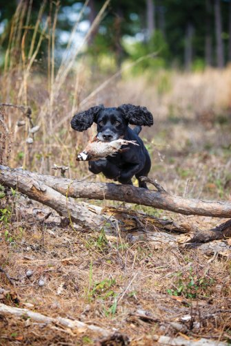 Dop jumping over log with bird in its mouth