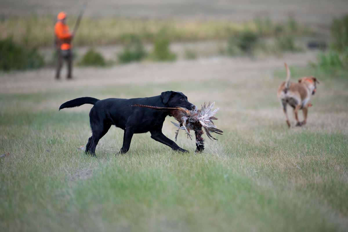 The Signature Lodge by Cheyenne Ridge Outfitters