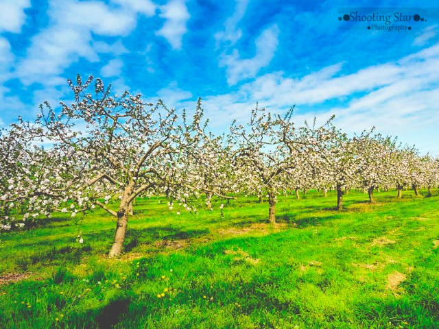 orchards-Edit