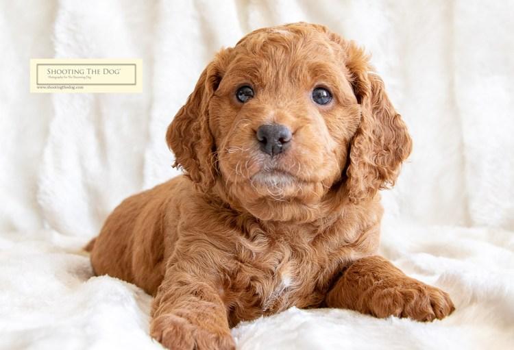 Puppy Photography Brixham Torbay Devon