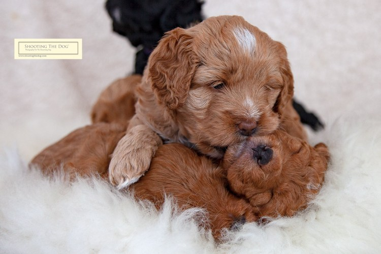 Early days puppy photography